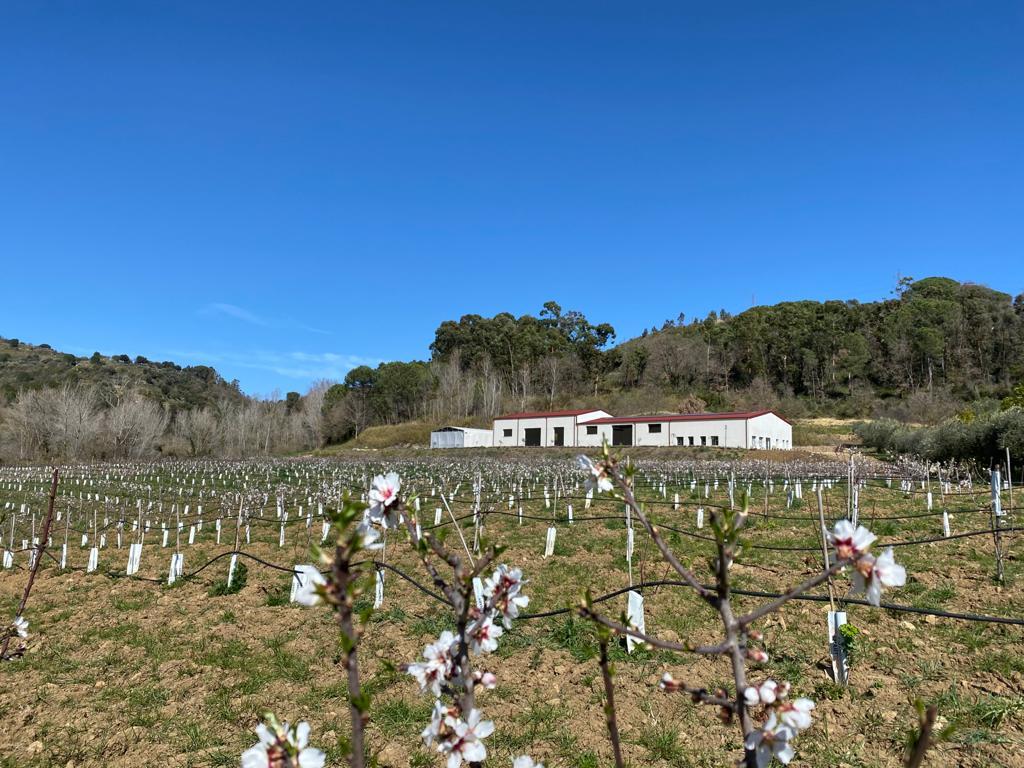 fiori-mandorle-tenuta-piazzaarmerina-sicilia-bagheria366AC4D0-B7AC-E160-7F39-C88D72176D34.jpg